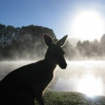 Bracken, our Creepy Kangaroo in Australia