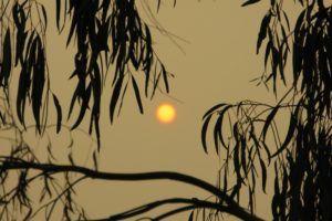 Victorian Bush Fire smoky morning