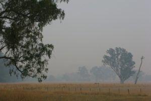 The smoky landscape on February 12th, amid the Victorian BushFire