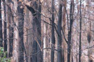 victorian bushfires 2009