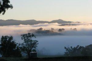 winter fog in Australia