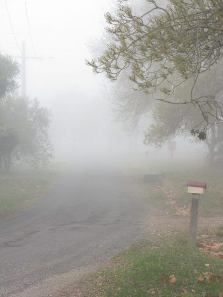 thick winter fog in rural Victoria