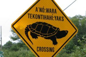 Turtle crossing sign - Canadian wild animals abound!