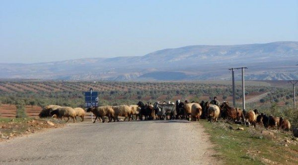 syrian traffic jam