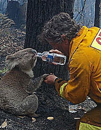 victorian bushfire essay The great divide fires lasted 69 days with thousands of community volunteers and the great divide complex fire 2006/07 in victoria was an emergency on a very.