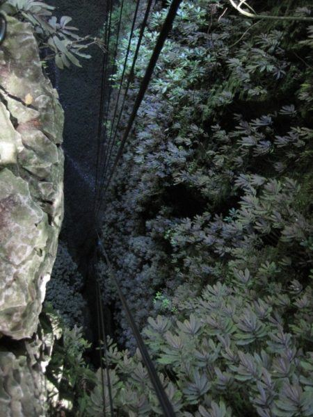 fixed abseil lines extending more than 100 metres into the Lost World Cave in Waitomo New Zealand