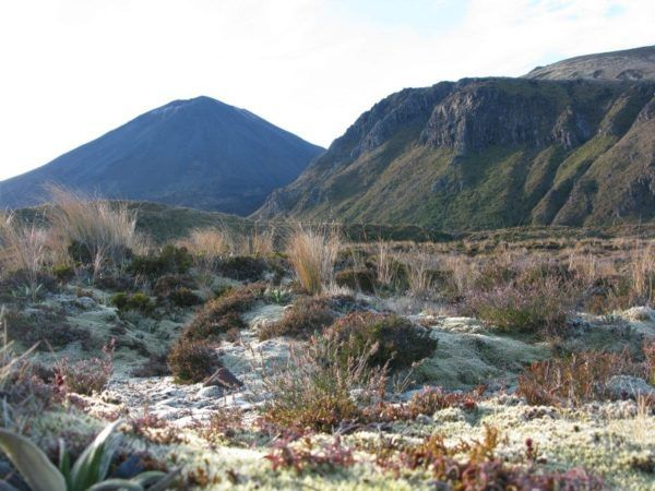 flora and lanscapes at Tongariro New Zealand