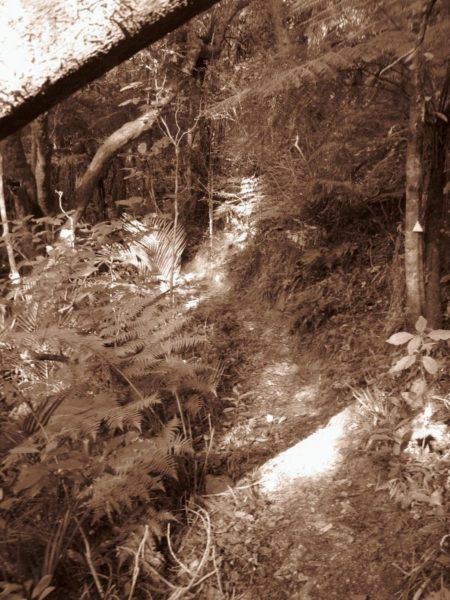 A sepia image of the walking trails in New Zealand on the Coromandel peninsula