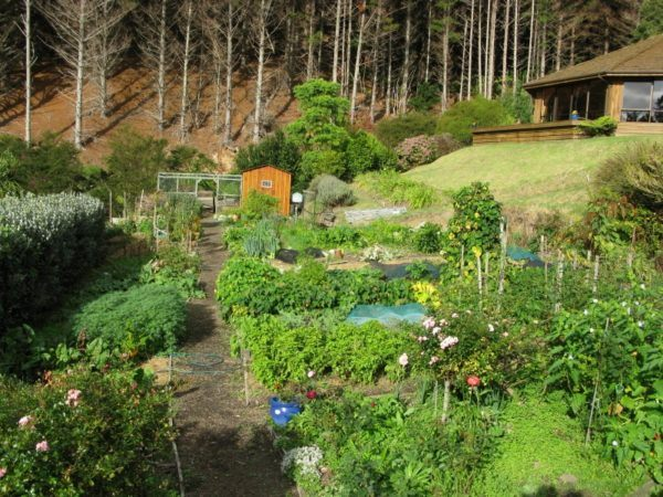 the garden at Mana