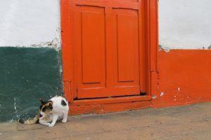 cat in front of doorway