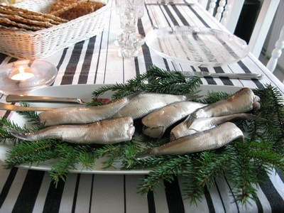 Surstromming in Sweden, traditionally served on boughs of pine branches