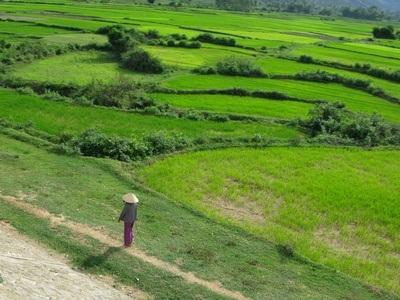 purple woman walking through green field