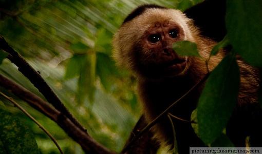 sneaky monkey....