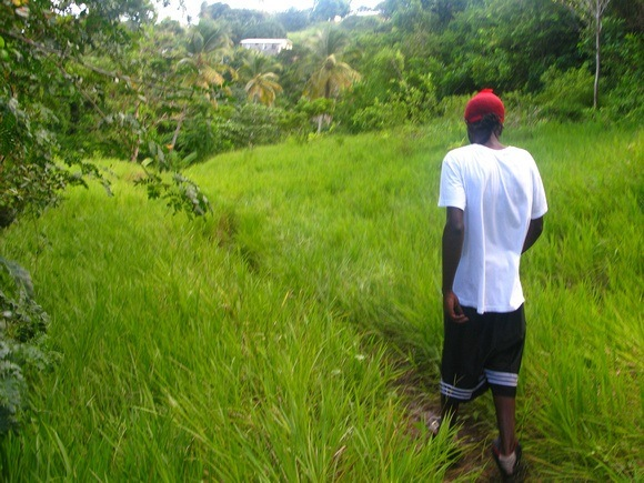 liming through the fields