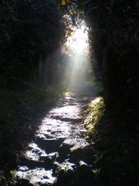 light on the path ahead