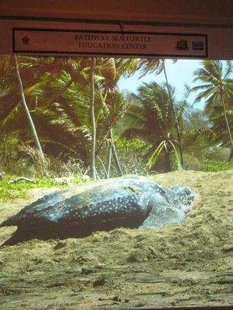 turtle conservation education centre video