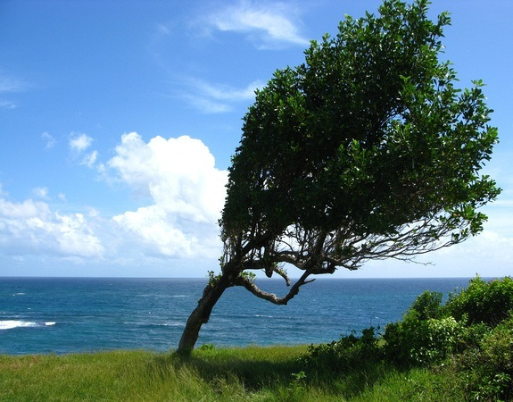 a tree growing in the wind; flexibility and strength