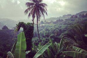 Grenada lush foliage