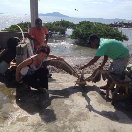 capturing and banding a pelican in Panama