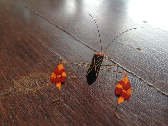 beautiful orange and red bug in Panama