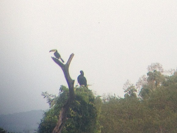 Toucans in Panama; my fav part of Panama's wildlife