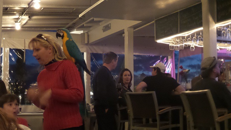 a pub in Santa Rosa, including patrons with parrots on their shouders