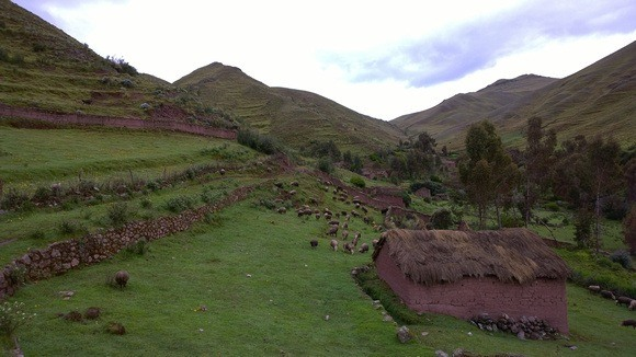 view of Puca Marca Inca ruins with llamas in background