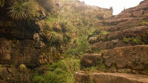steep natural inca stairs