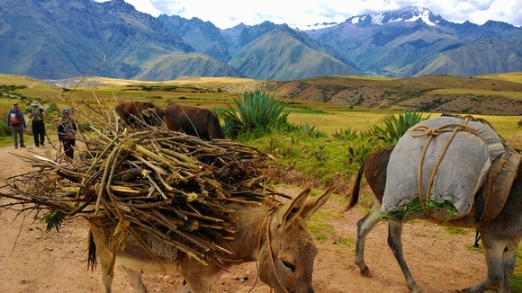 The hike to Maras Salt Mines Peru from Moray is beautiful, with donkeys and Andes mountains towering in the background