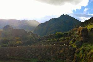 san pedro, ayahuasca, and plant medicine in Peru