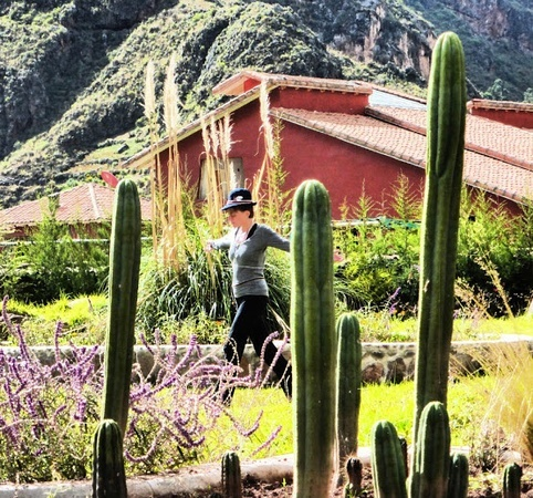 walking through a san pedro plant medicine garden in Peru