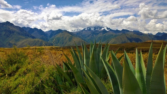 snow-capped mountains and cactus plants in Peru