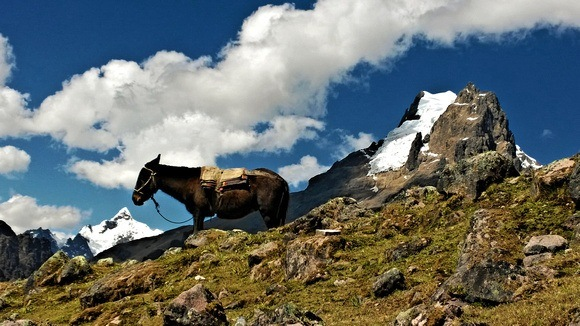 Lares trek in Peru with a donkey and glacier in the background