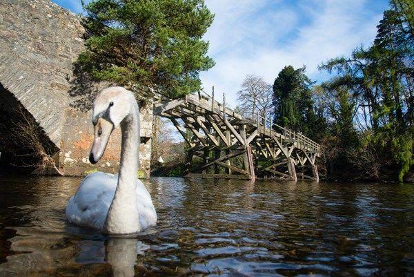 SwanBridge