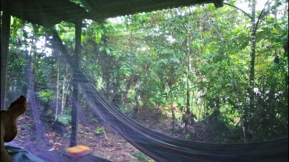 The view from my bed in the jungle