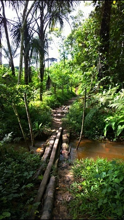 The jungle path into Sachamama retreat centre, 30 minutes from the road