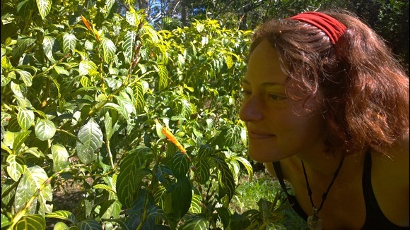 Nora Dunn, The Professional Hobo, with the altaruna plant in the jungle, part of her jungle journal experience