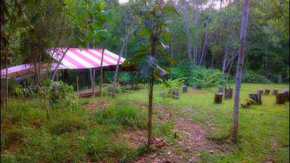 jungle clearing near my tambo