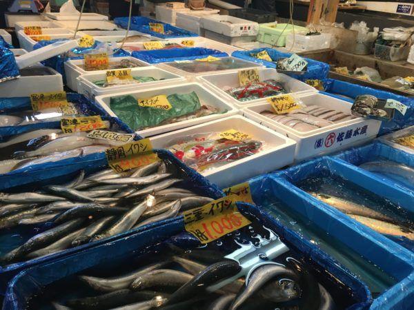 Tsukiji Fish Market fish for sale!