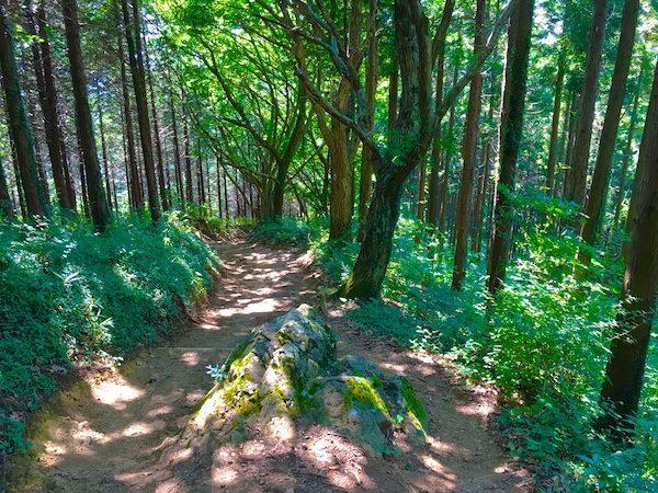 Mount Takao trails on Takao mountain Japan