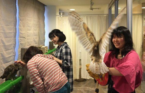 owl cafe antics