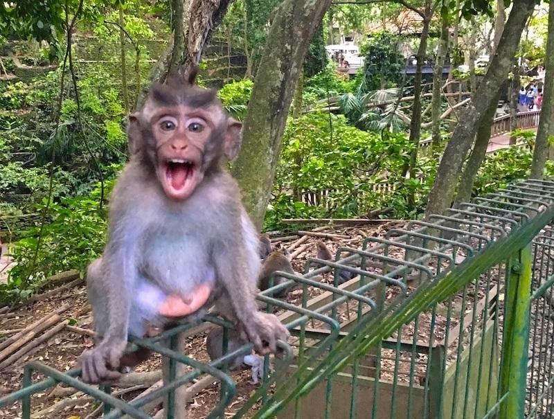 My Monkey Forest Commute in Ubud (Vlog Ep. 26)