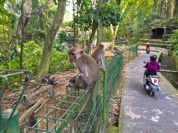 monkey forest shortcut