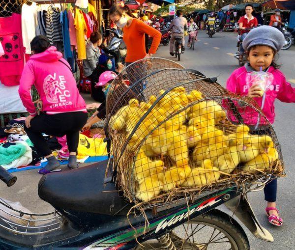 chicks on a bike in Vietnam