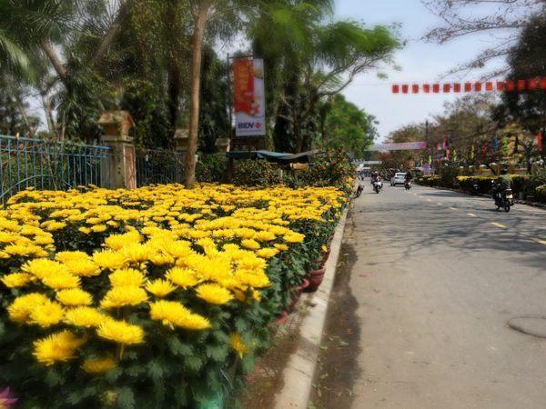 Hoi An during Tet - sidewalks full of flowers