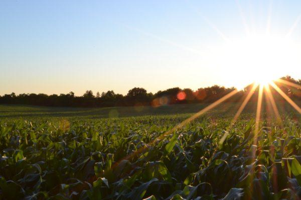 farm - how to make money on the road holiday visa