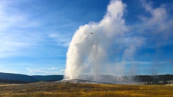 Old Faithful, a must-see when you're on a Yellowstone vacation
