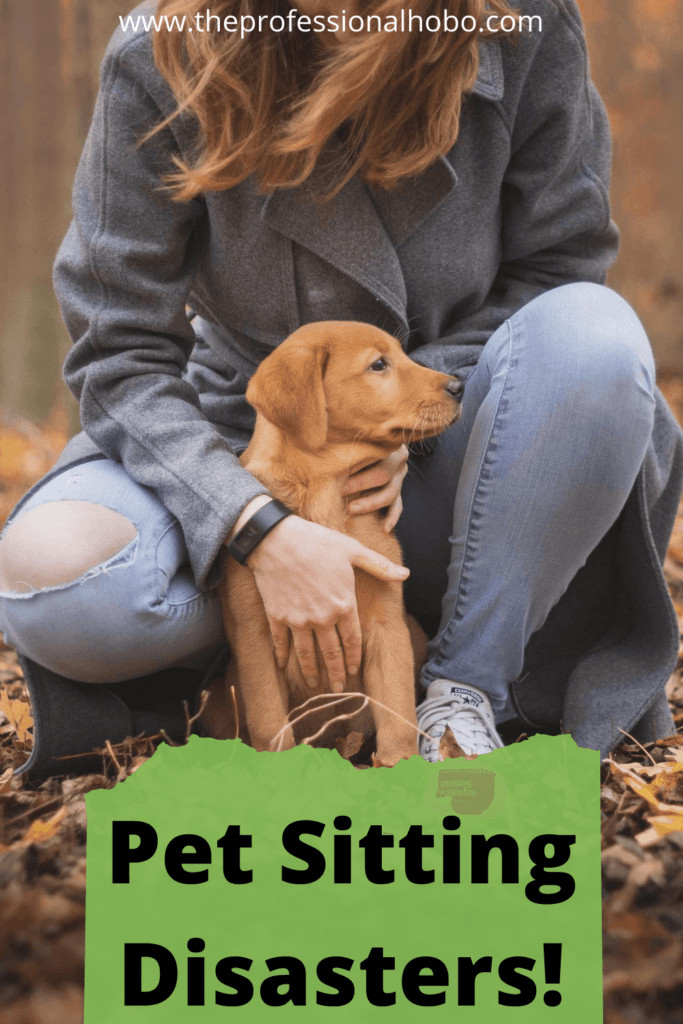 Pet-Sitting disasters! Petsitting is a great way to get free accommodation and experience the comforts of home while you travel. But heed this cautionary tale before you accept your next gig! #housesitting #petsitting #freeaccommodation #TheProfessionalHobo #traveldisasters