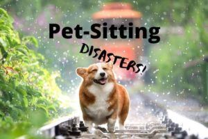 Pet-Sitting Disasters