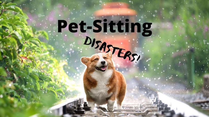 Pet Sitting Disasters: Read This Before You Apply for Your Next Pet-Sitting Gig.